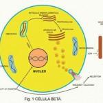 Mecanismo bioquímico de la diabetes tipo-2. Revisión