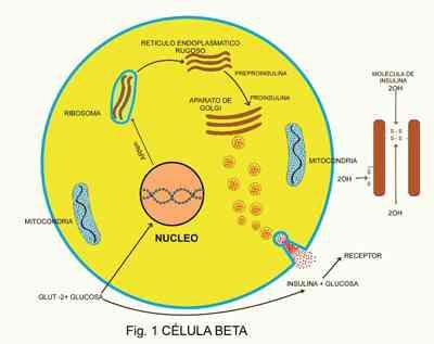 Mecanismo bioquímico de la diabetes tipo-2. Revisión %%page