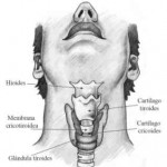 Manejo aéreo de la vía aérea difícil: Cricotiroidotomía