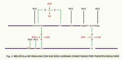 molecula-insulina-puentes-disulfuro