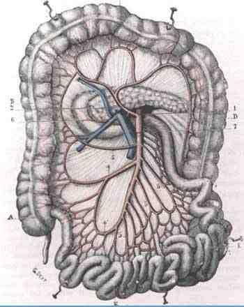 Sutura primaria del colon en el vólvulo del sigmoides. Presentación ...