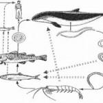 Sospecha de Anisakis en mujer adulta con síntomas de urticaria tras ingesta de pescado