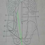Revisión bibliográfica de la hernia de Spiegel